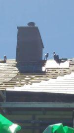 kilkenny roofing